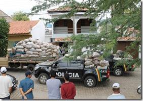 Agreste news revista, maior prisão de maconha no estado de pernambuco